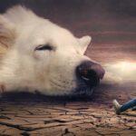 Angst vor Hunden verlieren/überwinden – Was tun?