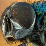 Was hilft gegen Fliegen? – Hausmittel, Falle