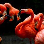 Warum stehen selbst tote Flamingos noch auf einem Bein?